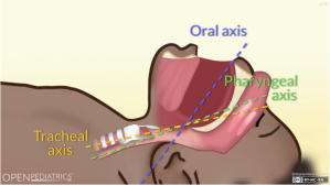 Screenshot of Oral, Pharyngeal, and Tracheal Axes animation.